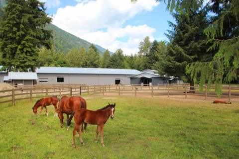Balmoral Construction Squamish equestrian commercial building 2